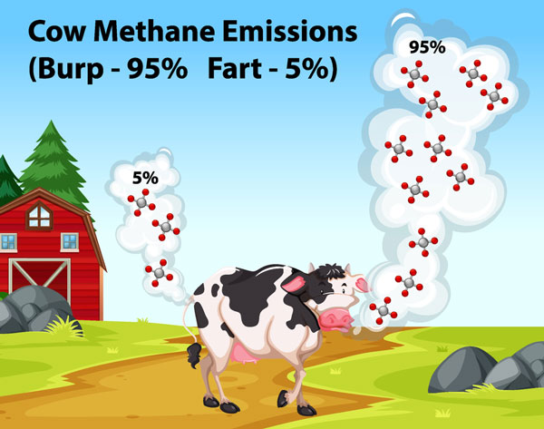 Cow Methane Emission - Greenhouse Gases